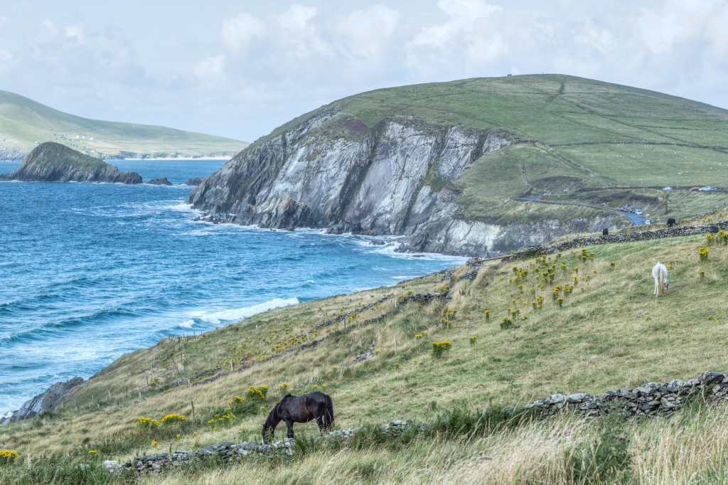 Horses at Dingle Peninsula Ireland Aug 2013